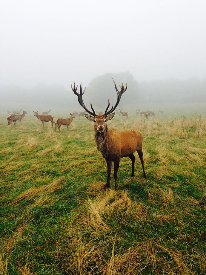 INOX DINE. Stag at Round Green Farm Worsbrough South Yorkshire.