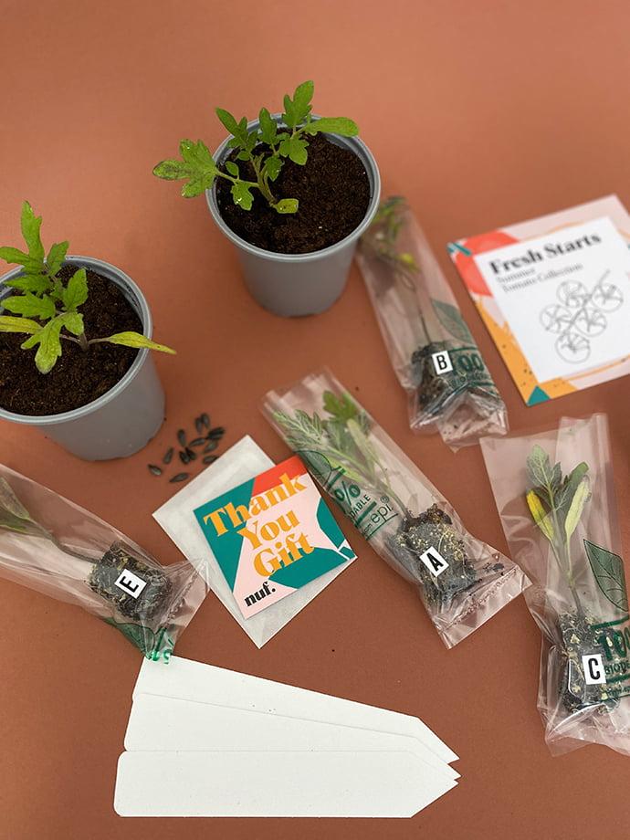 nuf's Fresh Starts kits